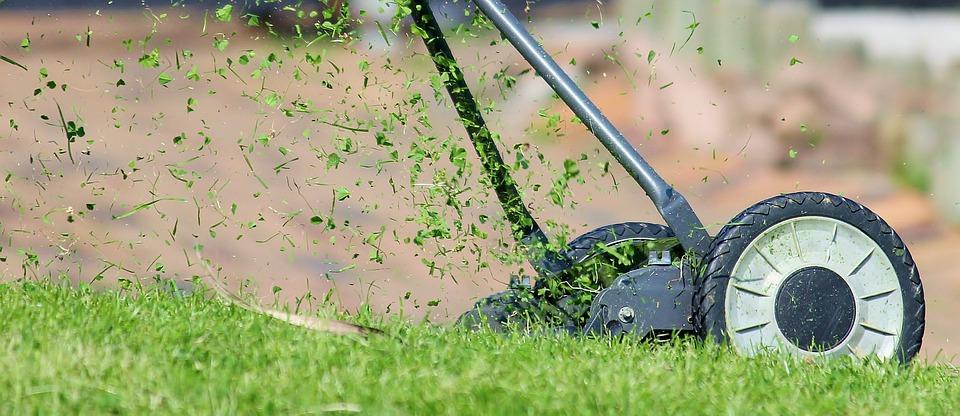 A Few Fun Lawn Care Facts - Lawn Love